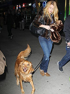 Blake Lively Walks Ryan Reynolds's Dog