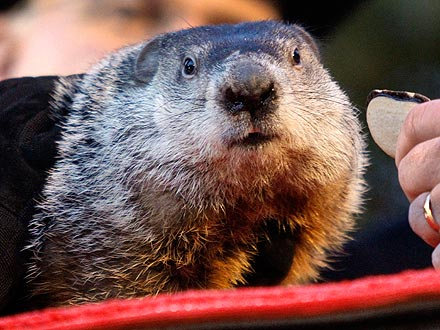 Groundhog Day: Punxsutawney Phil Makes 2012 Prediction