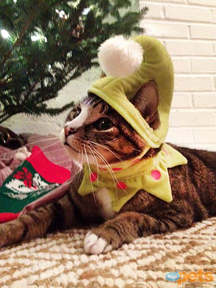 Ho-Ho-Holiday Pets!