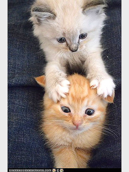 That's What Kitten Friends Are For!