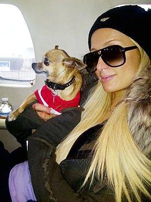 Precious Cargo Alert! Paris Hilton & Tinkerbell Prepare for Takeoff