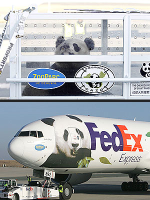 The Water Bowl: Pandas Get FedExed to France!