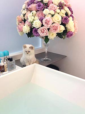 Karl Lagerfeld Gets a New Kitten
