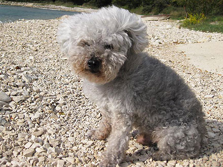 Uncle Chichi, Possibly the World&#39;s Oldest Dog, Dies