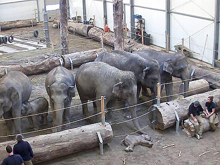 Elephants Mourn the Death of 3-Month-Old Calf