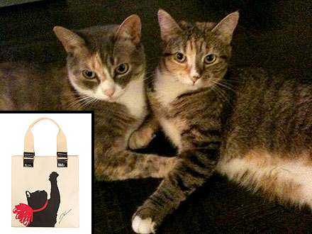 The Water Bowl: Jason Wu&#39;s Design Inspiration? His Cats!