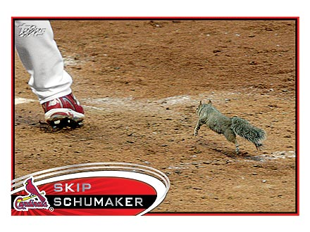 The Water Bowl: Rally Squirrel Immortalized on Baseball Card