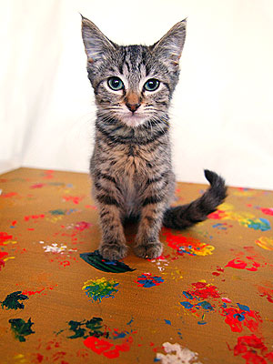 Purring Painters Raise Money for Animal Rescue