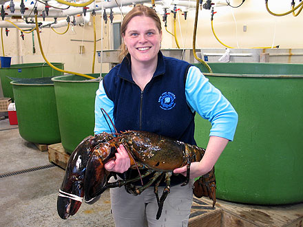 27 Pound Lobster Caught Off Maine Coast
