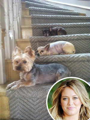 Hilary Duff &#8211; and Her Dogs &#8211; Anxiously Awaiting Baby