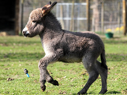 Aww! Dylan the Donkey Skips Into Spring