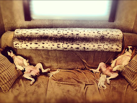 Julianne Hough's Dogs: Just Chillin'