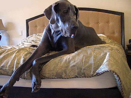 World&#39;s Tallest Dog George Featured in New Book