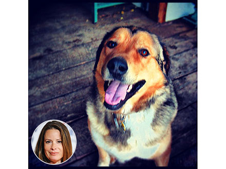 Holly Marie Combs&#39;s Dog Dies
