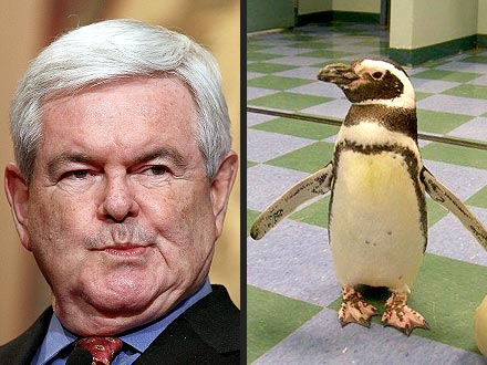 Newt Gingrich Bitten by Penguin in St. Louis