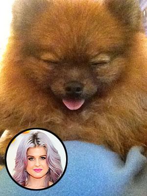 Kelly Osbourne Adopts Dog