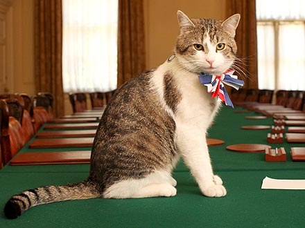 Russian Cat Enters Political Race