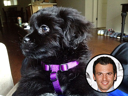 Dancing with the Stars: Tony Dovolani Gets New Dog