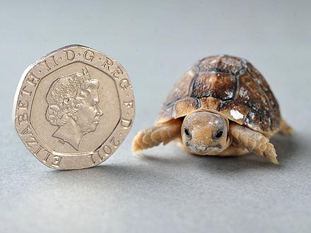 Aww! Tiny Tortoises Have That Just-Hatched Glow