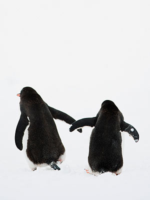 'Gay' Penguins Find Purpose After Getting an Egg