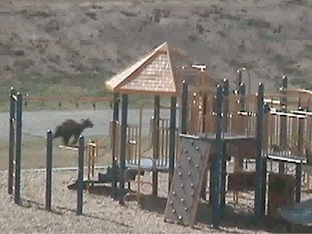 Bear Enters Elementary School Playground in California