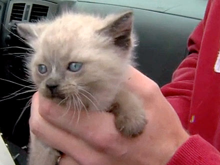 Construction Workers Rescue Kittens Found in Concrete