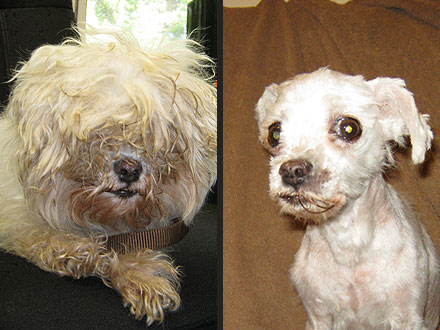 Adopt Me! Lily Lu Has a New Look – and Lease on Life