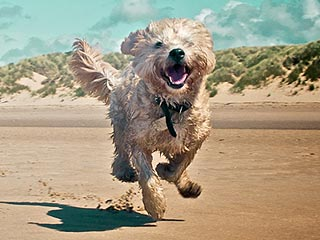 Show Us Your Beach-Loving Pets!