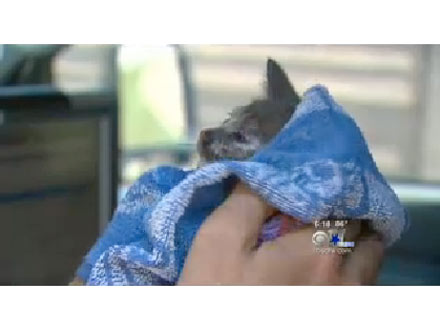 10-Year-Old Boy Saves Trapped Kitten