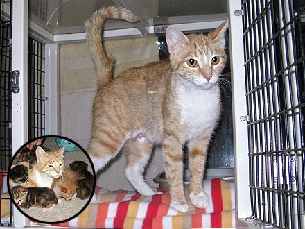 Cat Shot with BB Stays with Kittens