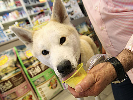 Pet Supply Store in Rome, Italy Offers Canine Gelato