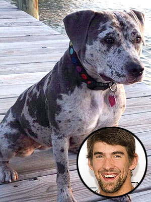 Michael Phelps's Dog Stella Learning How to Swim