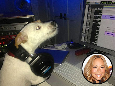 Mariah Carey's Dog Jill E. Beans at Record Studio: Photo