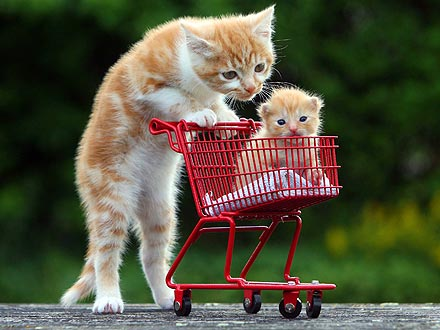 Aww! Kitten Pushes His Adopted Brother in a Cart