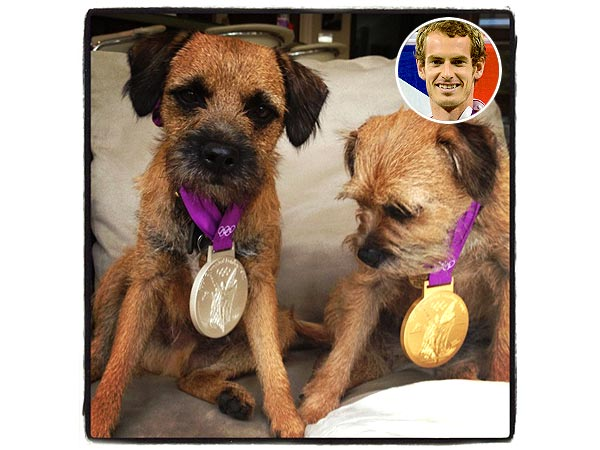 Andy Murray's Dogs Wear His Olympic Medals: Photo