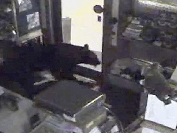 Bear Breaks Into Colorado Candy Store