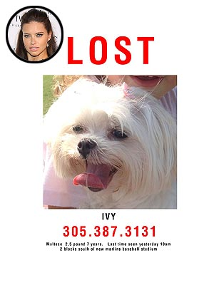 Adriana Lima Looking for Lost Dog