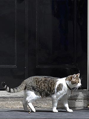 Larry 10 Downing Street Cat Fired?