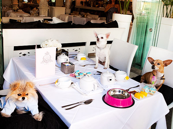Real Housewives of Beverly Hills Dog Giggy Has Tea Party