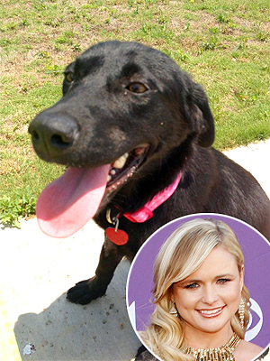 Miranda Lambert's Dog Loretta Missing