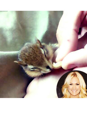 Carrie Underwood Tweets About Rescuing Chipmunk: Photo