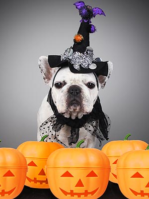 Halloween 2012: More Owners Dress Up Pets