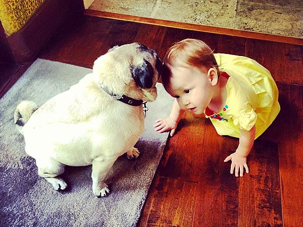Haven Warren Plays with Jessica Alba&#39;s Pug Sid