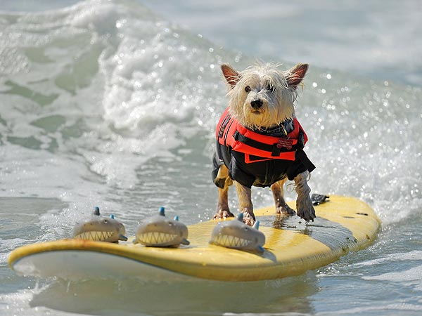 Cowabunga! Dogs Surf for a Good Cause
