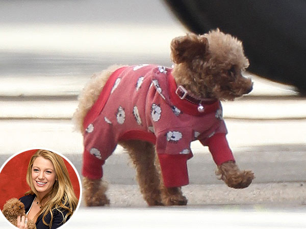 We Need to Talk About Blake Lively&#39;s Puppy Pajamas