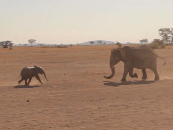 Kenyan Baby Elephant Rescued from Hole Reunites with Mother