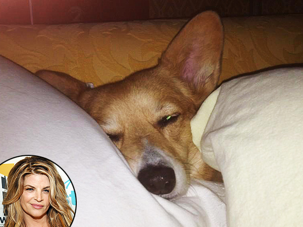 Kirstie Alley's Dog Undergoes Surgery