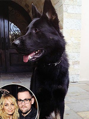 Nicole Richie and Joel Madden Get a German Shepherd Puppy