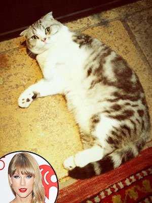 Taylor Swift's Cat Is Judging Her