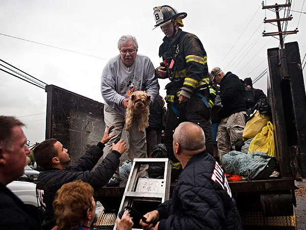 Hurricane Sandy: Animal Rescuers Working Hard to Save Pets